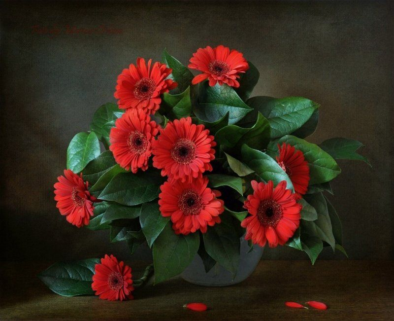 цветы гербера С герберамиphoto preview
