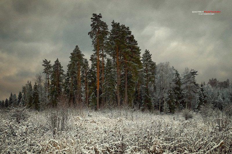 Деревья, Пейзаж, Природа, Снег, Сосны Устоявшие.photo preview