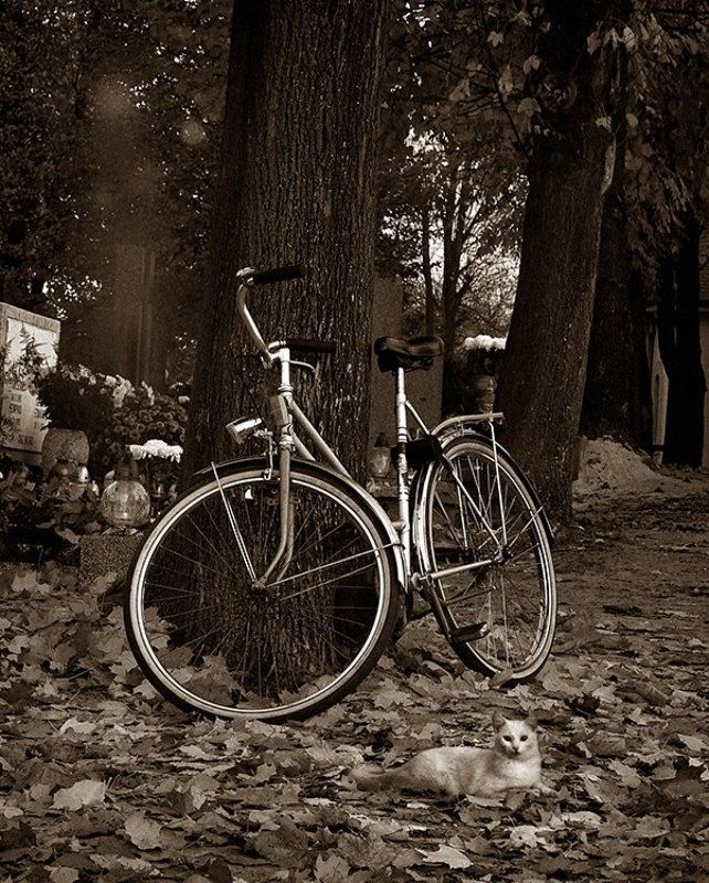 wake,cemetery,ghost,old,memory,canon, Deireadh an Rás ©photo preview