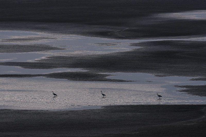 серые, , цапли марсианские хроникиphoto preview