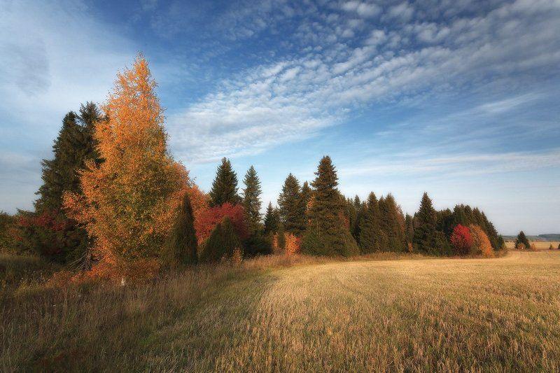 Поле трава лес краски осень облака Изгиб осеннего лесаphoto preview