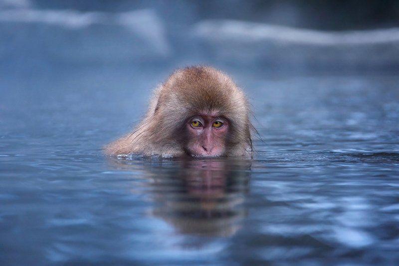 япония, обезьяна Холодно мне… холодно…photo preview