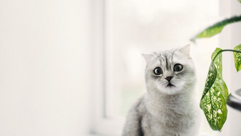 кот, кошка, белый, белая, полосы, животное, листок, зелень, окно, canon, Котэphoto preview