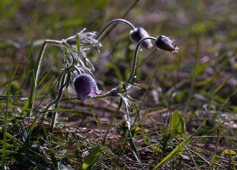 Весны прекрасные мгновенья...photo preview