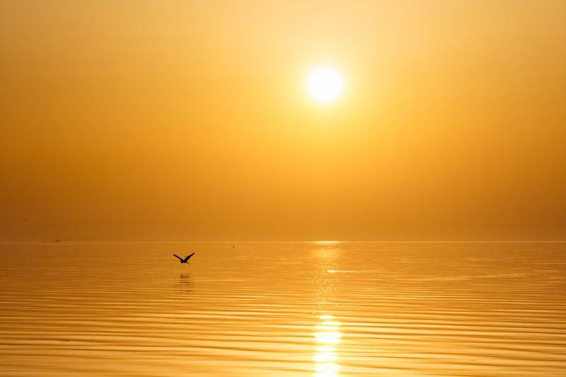 закат, море, солнце, вода, птица, золото, отражение, пейзаж минимализм Золотой закатphoto preview