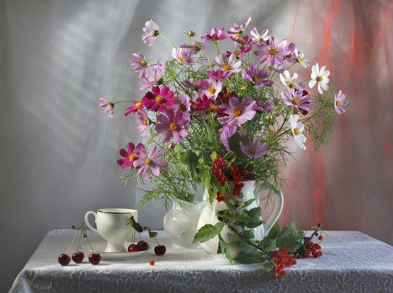 цветы,космея,ягоды,смородина,вишня,лето Салют...photo preview