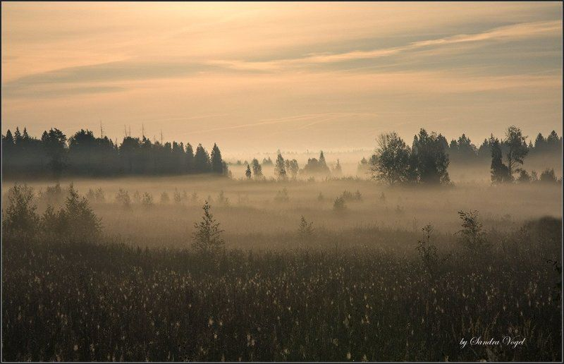 morning, fog, утро, туман, тверская, область Morning Fogphoto preview