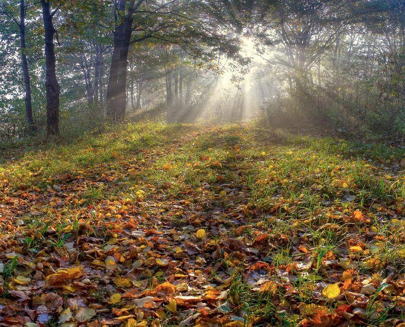 лес, утро, туман, осень дыхание осениphoto preview