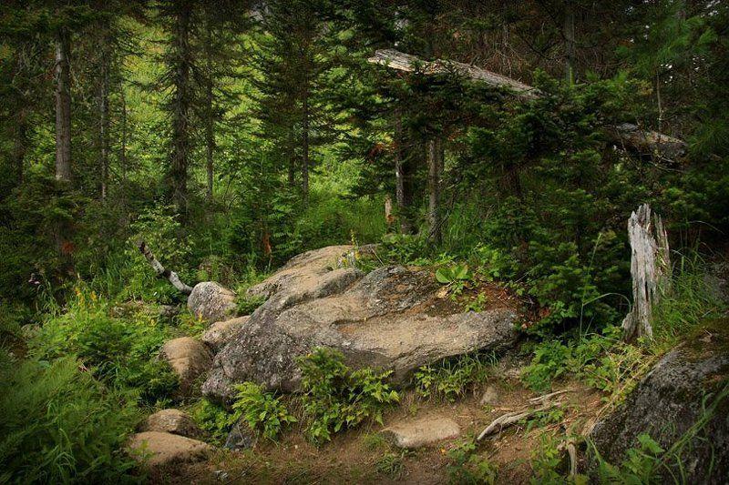 сибирь, тайга, лето, тропа Тропа к таежной заимкеphoto preview