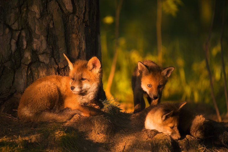 animals, wild In the last rays...photo preview