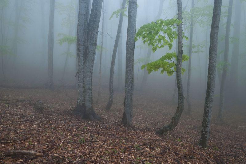 Майский туман.....photo preview