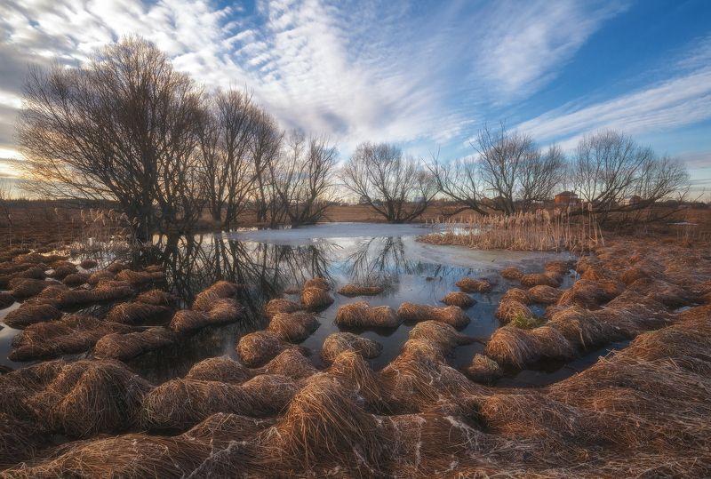 россия, подмосковье, весна, пруд, кочки, трава, вода, небо, облака Весенние кочкиphoto preview