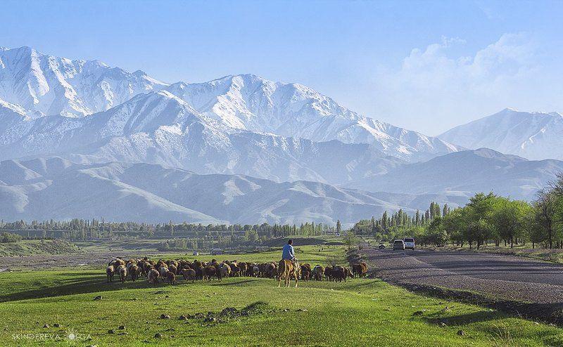 Кыргызстан,Тянь-Шань У каждого своя дорогаphoto preview