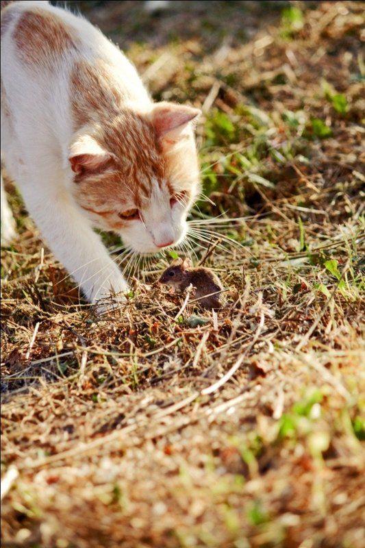 кошеа, мышка Том vs Джерриphoto preview