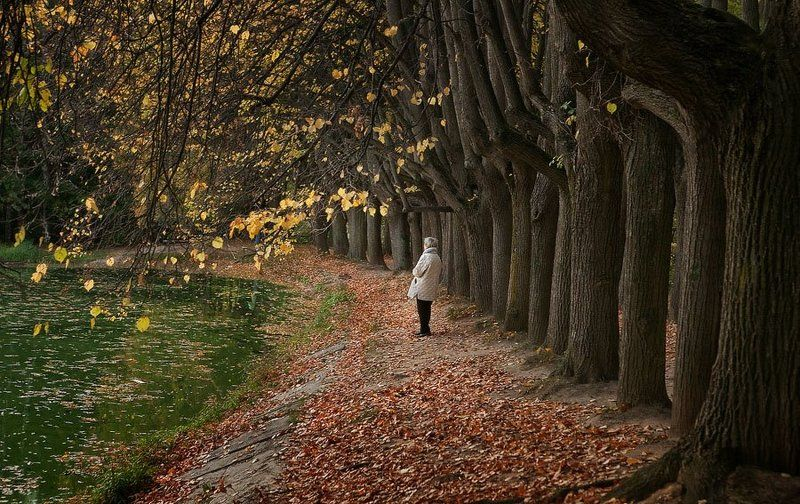 осень, пруд, аллея, одиночество, тишина Осень жизни, как и осень года.photo preview