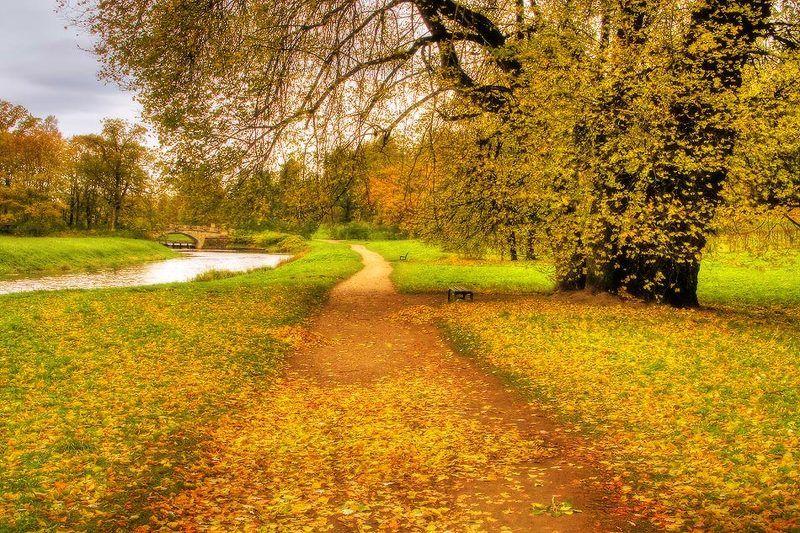 Золотая осеньphoto preview