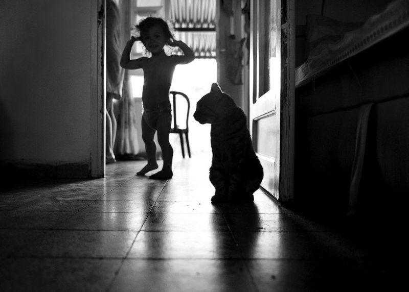 марк, кот, комната, силуеты Двое в комнатеphoto preview