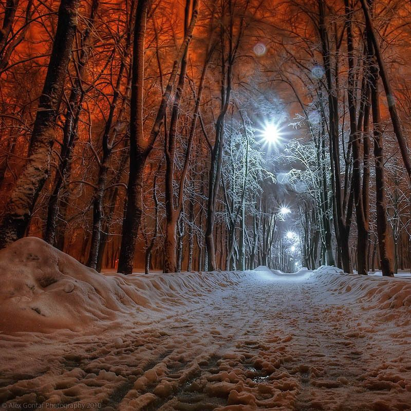 alex gontar, darkness, dusk, fiery-fish, kiev, lantern, night, olympus, park, public garden, red, snow, square, the capital, the winter, trees, ukraine Nightly Kiev. 219854photo preview