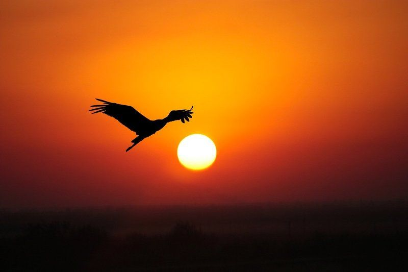 природа, птицы, аист, закат Аистphoto preview
