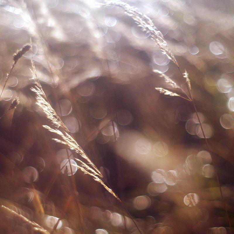 Холодное утро октябряphoto preview