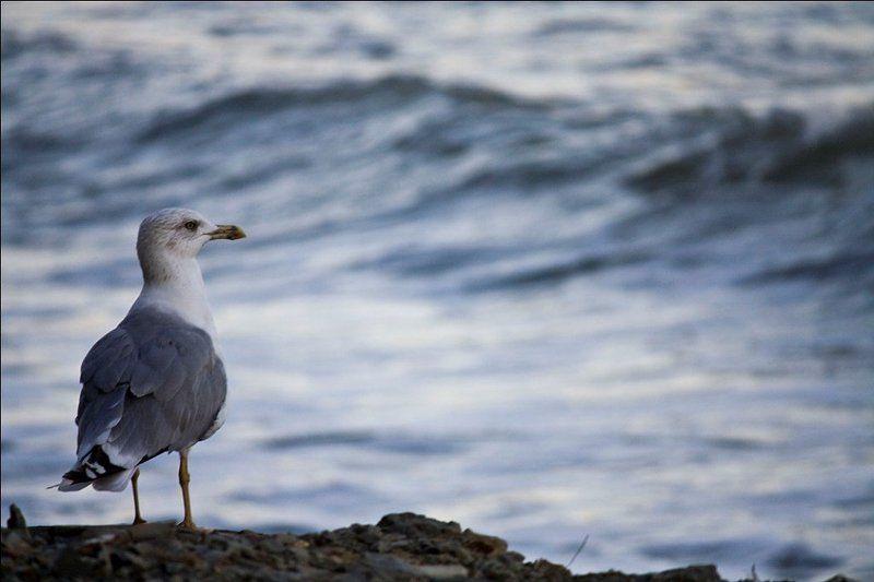 море одиночествоphoto preview