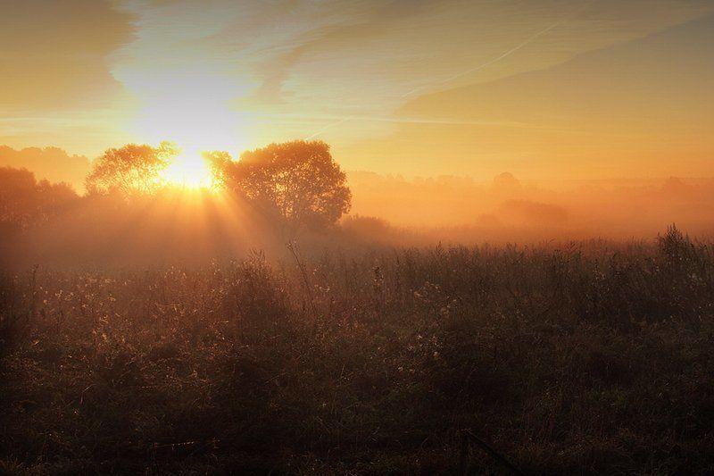 ...утро...photo preview