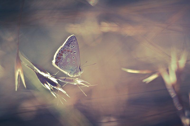 butterfly, nature The little travelerphoto preview