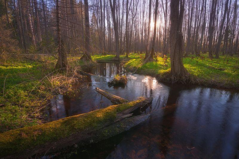 россия, подмосковье, весна, вечер, закат, лес, река, солнце, свет, небо, трава, вода, деревья В весеннем лесуphoto preview