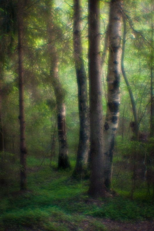 monolens, монокль, пейзаж, природа, пиктореализм, свет В чащеphoto preview