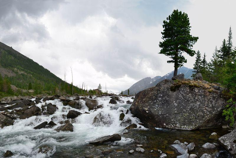 Мультинские озёра, Мульта, Алтай Дерево между Озерphoto preview
