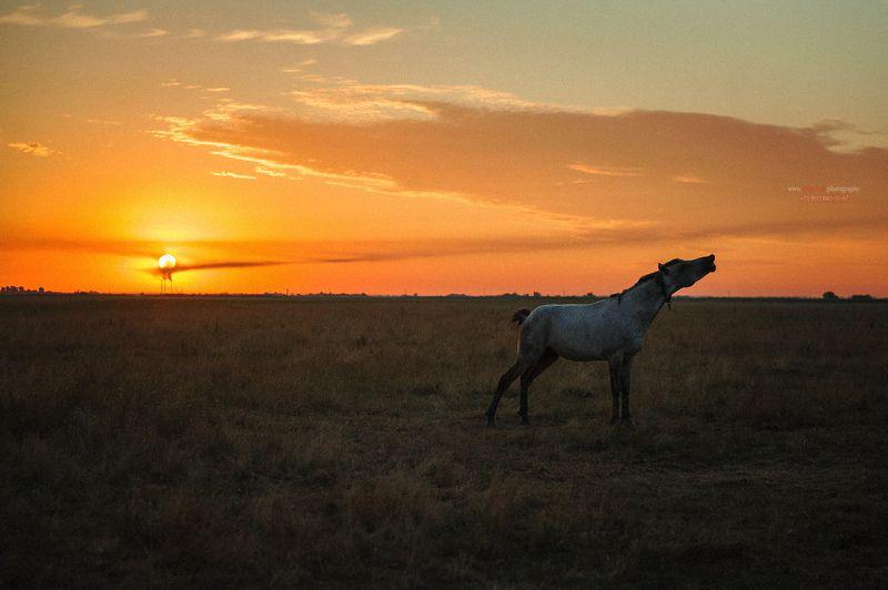 лошадь, пейзаж, восход солнца, в поле лошадь ****photo preview