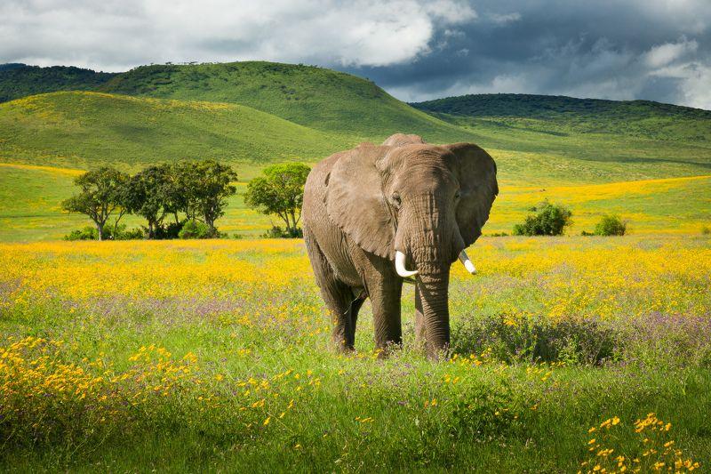 Слон в полевых цветахphoto preview