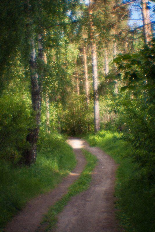 фото, природа, лес, монокль, пикториализм, дубна, россия Полуденный знойphoto preview