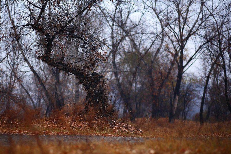Осеннийбалphoto preview