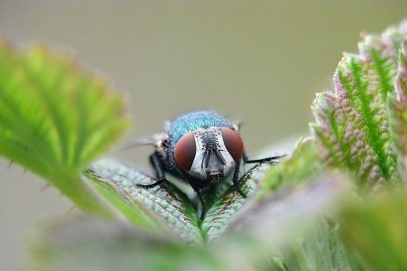 муха зелененький он был...photo preview