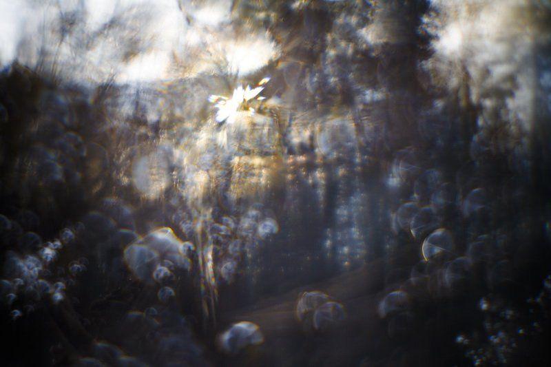 монокль, иней, трава, солнце Всякое дыхание... [3]photo preview