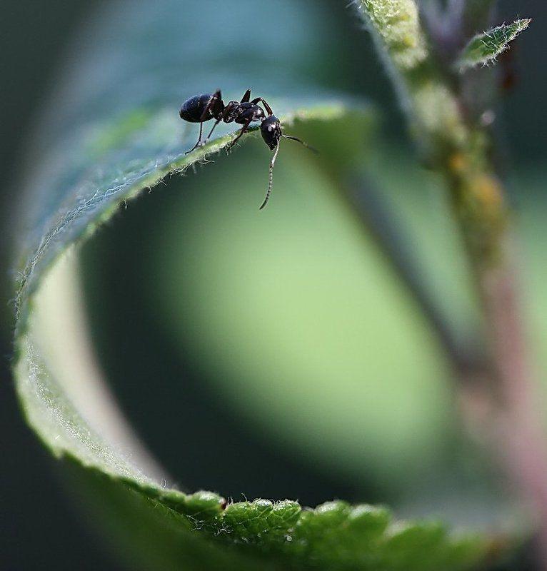 муравей Поднять парусаphoto preview