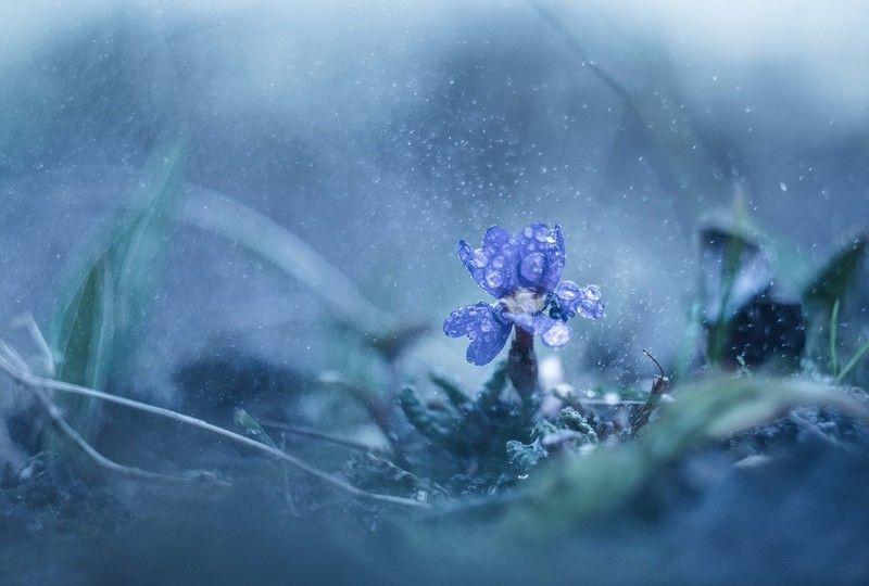 Зимняя Веснаphoto preview