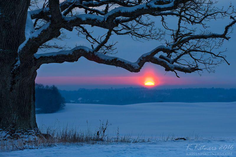 snow oak tree blue white winter sky clouds latvia landscape field sun sunset cold The Old Oak In Winter Eveningphoto preview