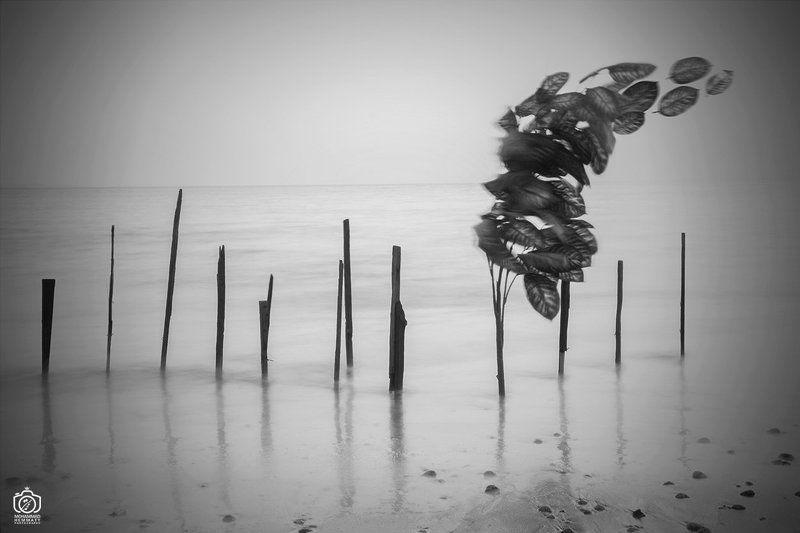 longexposure,nature,landscape,blackandwhite,canon,canonphotography,canon80d,sea,fineart,photo,photography,leaves,fly,dream Fly leavesphoto preview