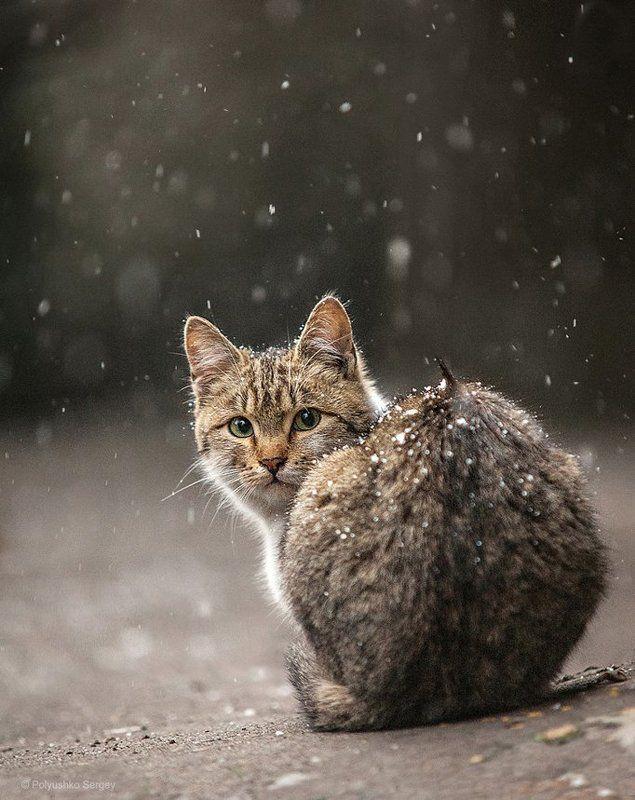 кот, котенок Одинокий котphoto preview