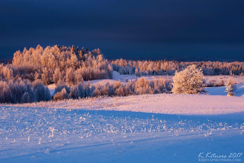 snow oak forest tree blue white winter sky clouds latvia landscape field sun sunset cold Freezy Sunsetphoto preview