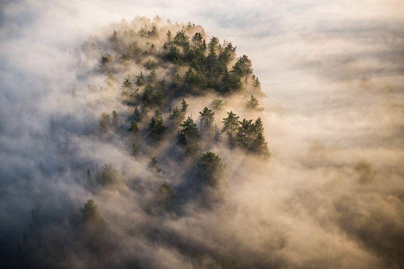 туман, пейзаж, лес, высота, облака, рассвет В туманеphoto preview