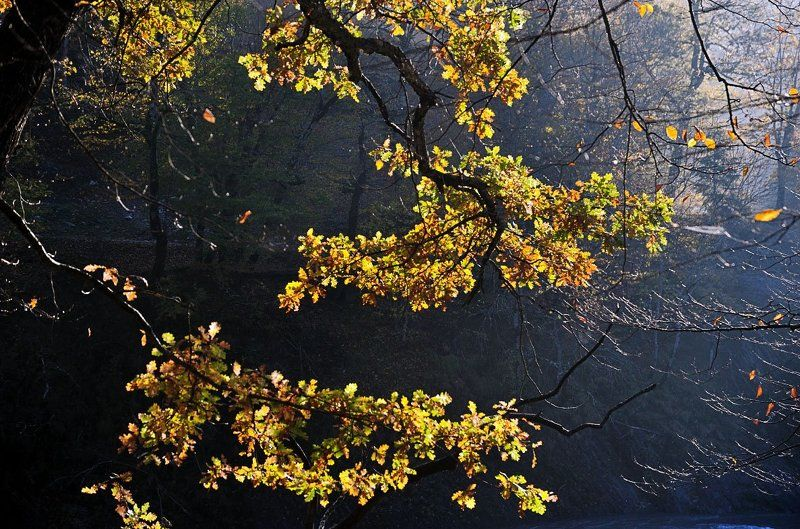 этюд, осень, дуб, кавказ, утро, солнце, листва Осенний этюдphoto preview