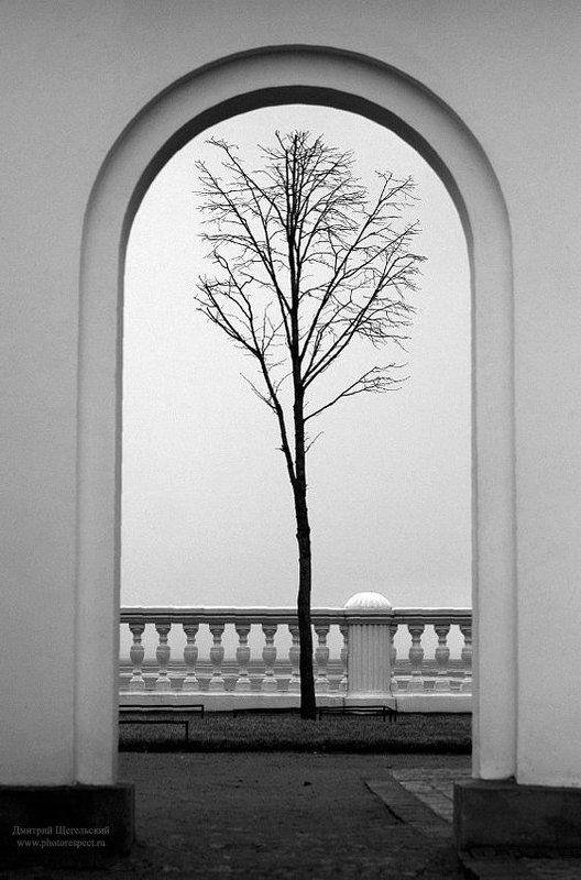 петергоф, арка, дерево, одиночество, монплезир Одиночествоphoto preview
