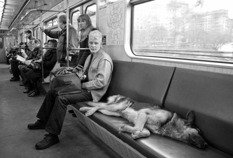 белкин, метро, собака, вагон, люди, алексей белкин, пассажиры метро, собака в метро, Пассажиры метроphoto preview