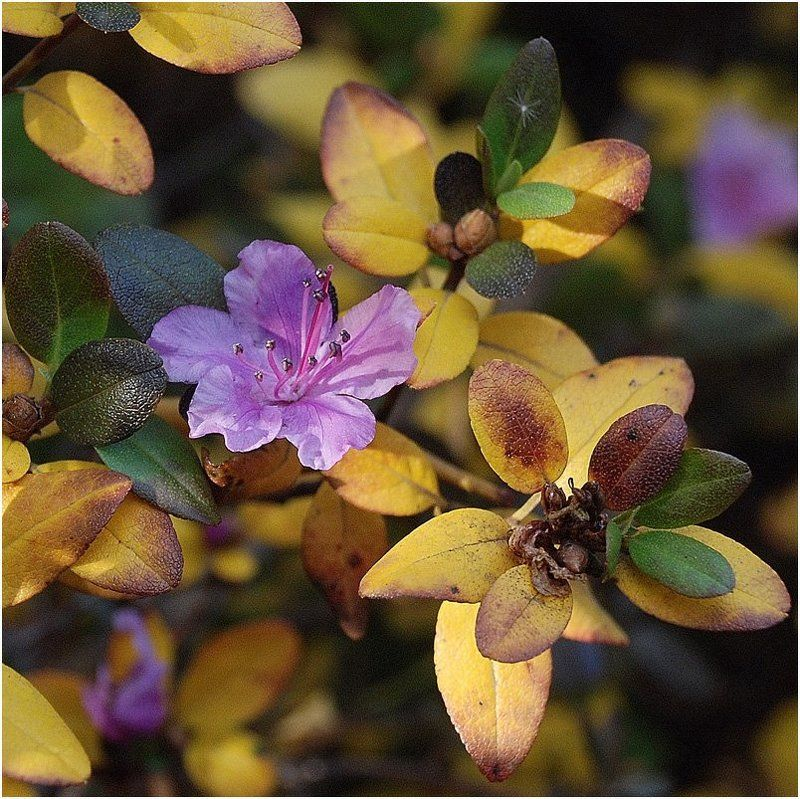 осень, цветок, времена_года Вопреки Правилам Осениphoto preview