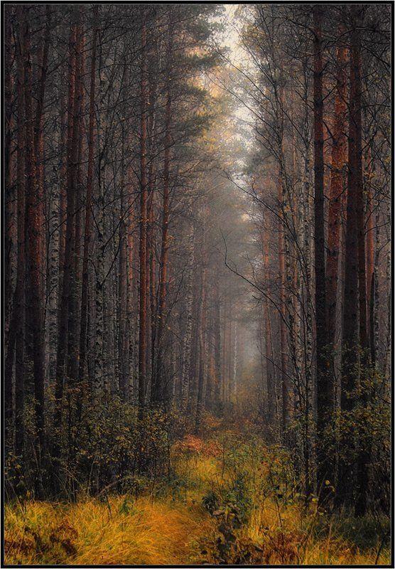 лес, просека Путь домойphoto preview
