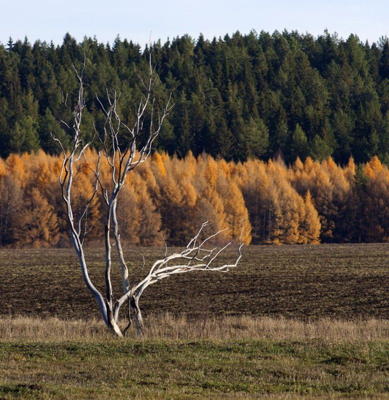 Из жизни двух сухих деревьев.photo preview