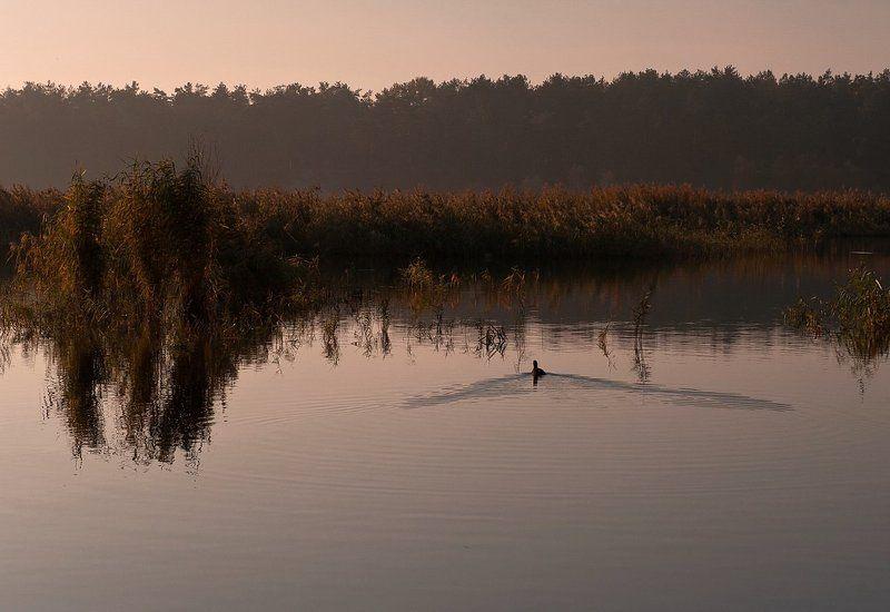 озеро, утро, , небо, уточка Ранним утром..photo preview